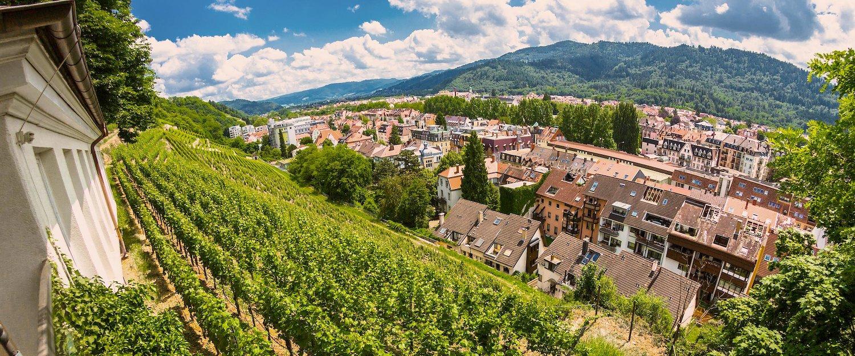 Weinberg in Freiburg