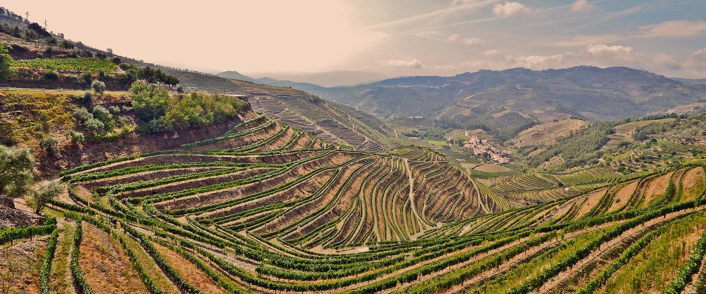 Videiras no Vale do Douro