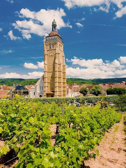 Vignes, Arbois, Jura