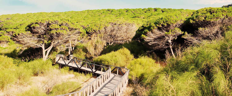 Bosque de pinos en los alrededores de Tarifa