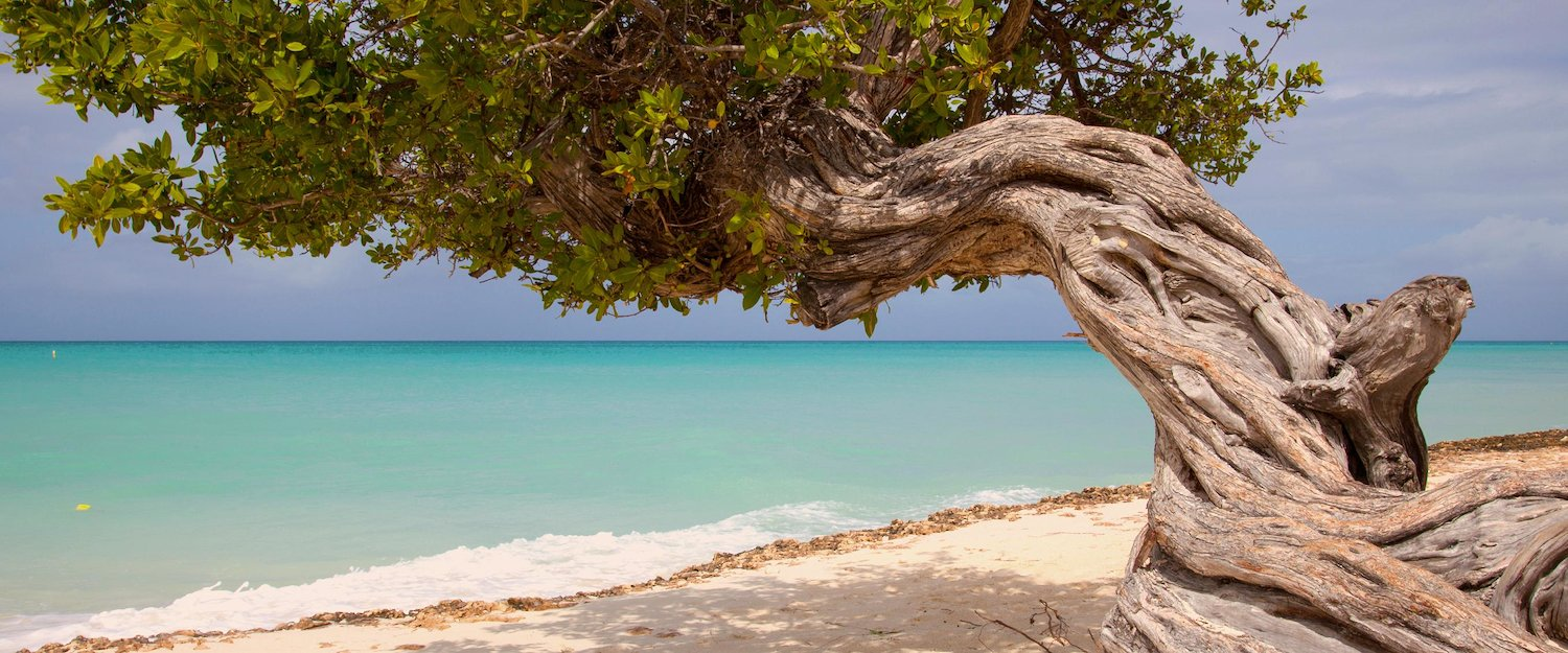 Holiday Homes & Baches in Aruba