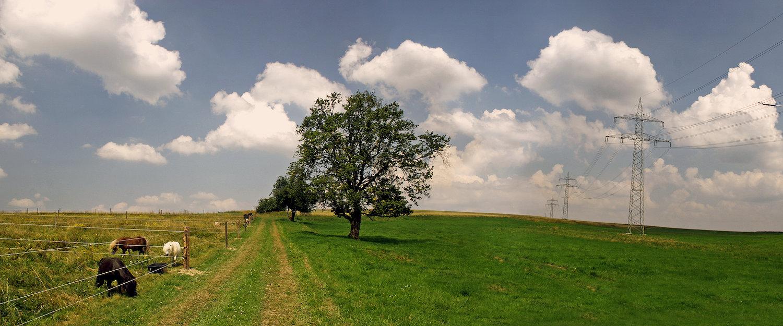 Wälder und Wiesen in Hasselfelde
