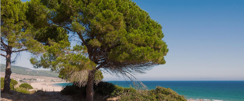 La playa y los árboles en Islantilla