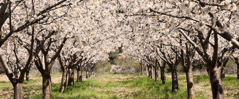 Jerte en Primavera