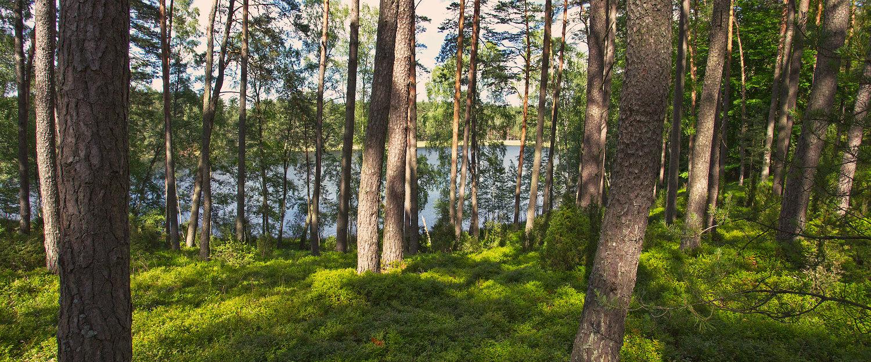 Bory Tucholskie to jeden z najbardziej zalesionych regionów Europy